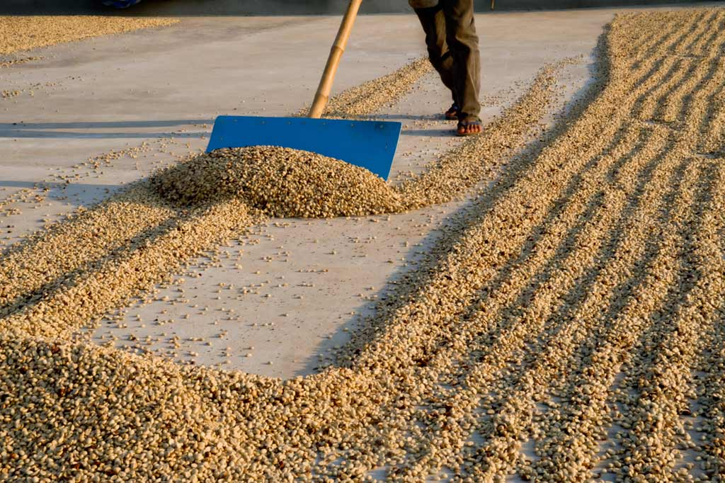 Coffee-processing-methods-how-do-they-work