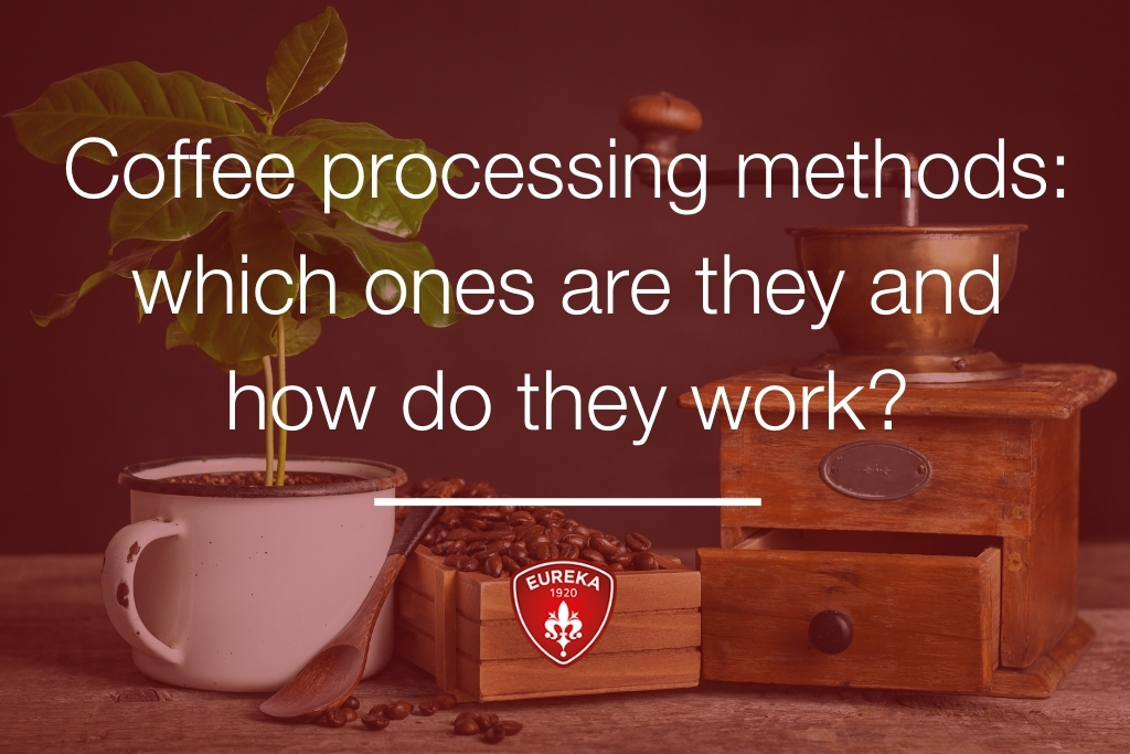 Coffee-processing-methods-which-ones
