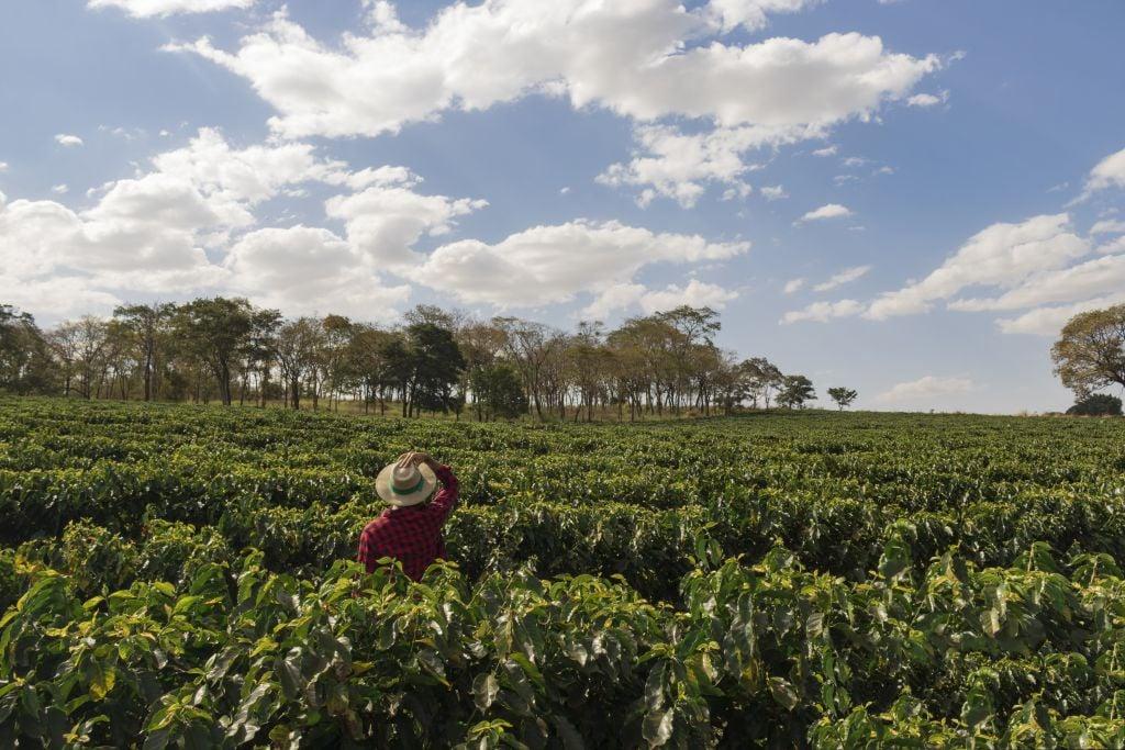 fattori che incidono sulla qualità del caffè - piantagione