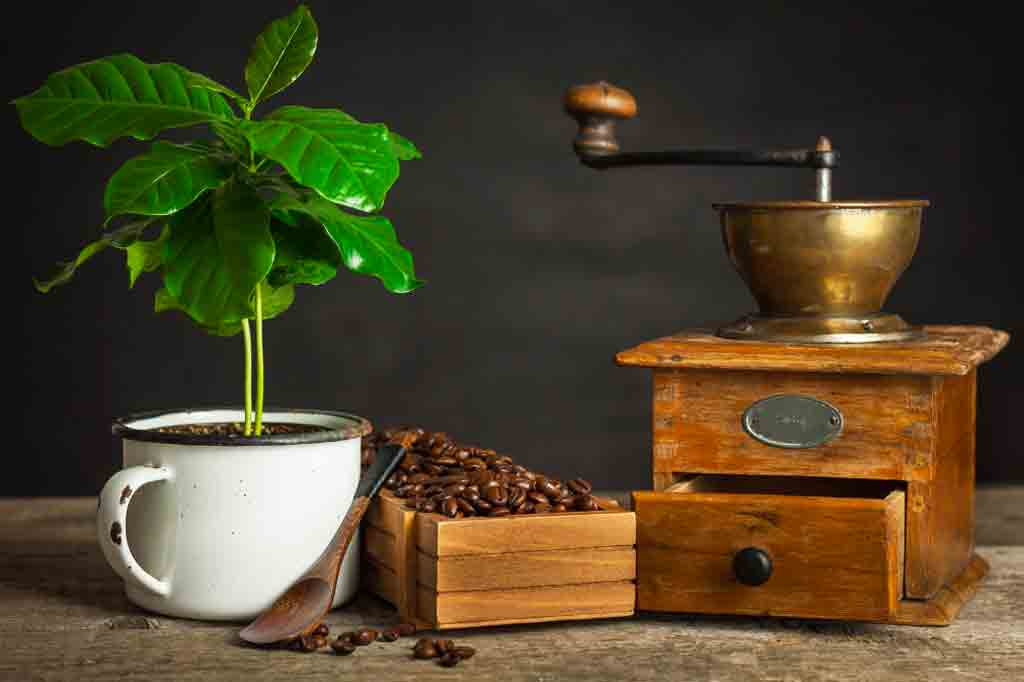 Coffee processing methods: which ones are they and how do they work?